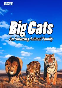 Big Cats: An Amazing Animal Family